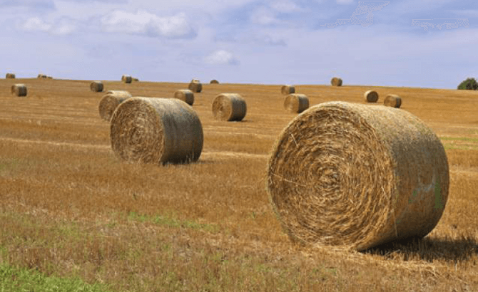 Beef farmers advised about the risks of straw impaction