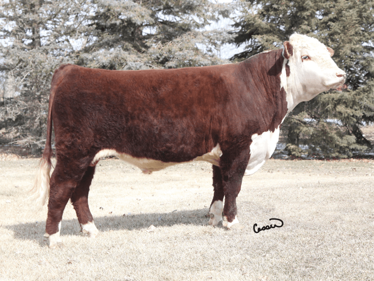 Tlell 8N RED ZULU (Semen) (Imp CAN) {DLF IEF HYF} pictured after a winter at stud