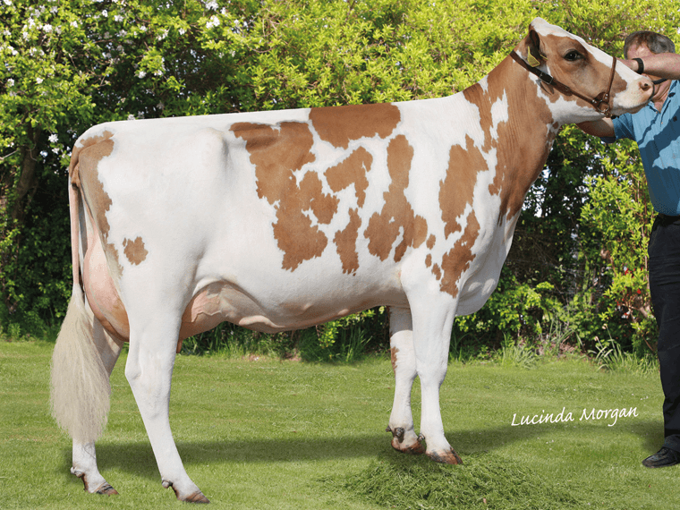 First Quality daughter Stamford Charm 59 EX96(5).
