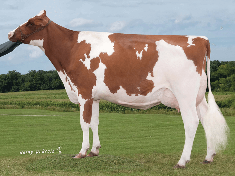 The dam of Piranha-P is Bush-H-Creek Poppy P-Red EX90.