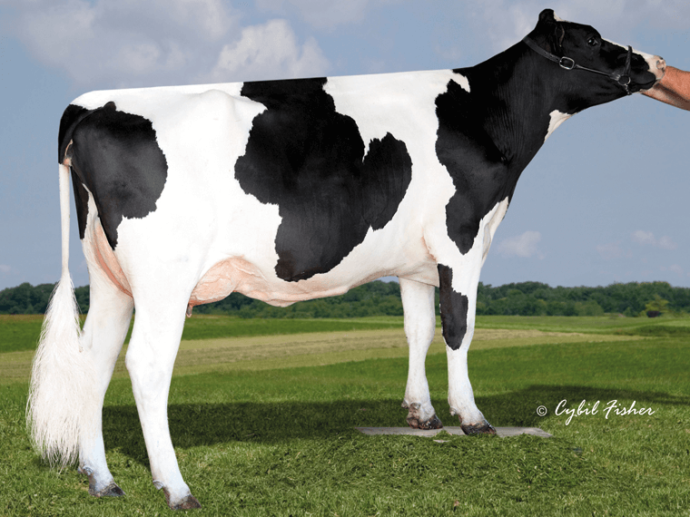 CHARIOT's dam is Eildon-Tweed MG Charlott VG85.