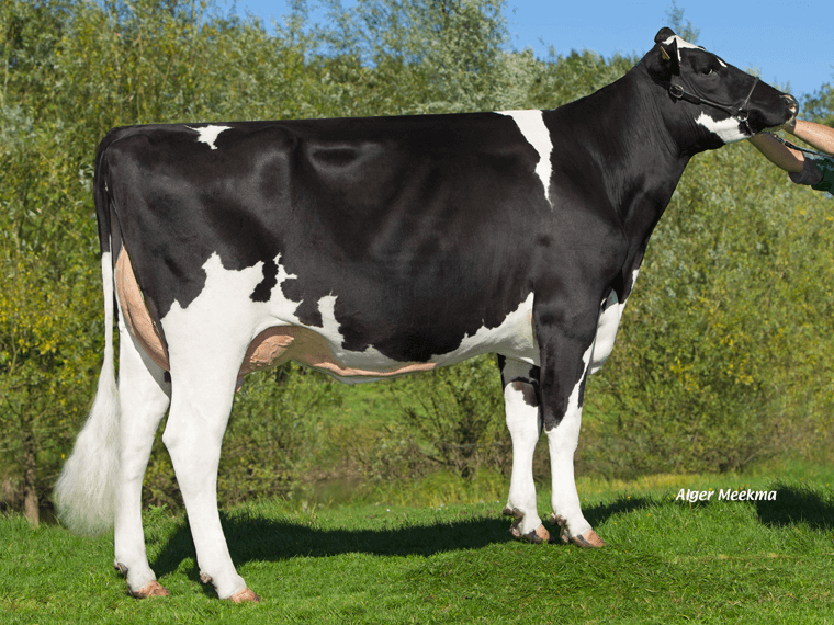 Dam of Levis, Helens GP84-2yr.
