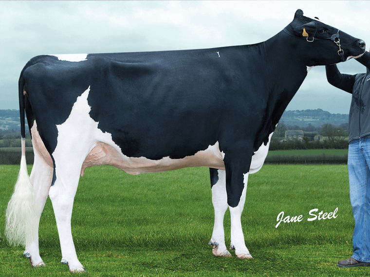 NEIL's maternal grand dam is Longmoor Ivana P RC VG87
